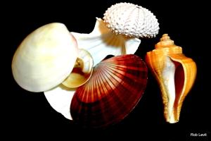 Shells Rob Levit