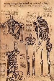 anatomy, Teach Like Leonardo, Education Closet