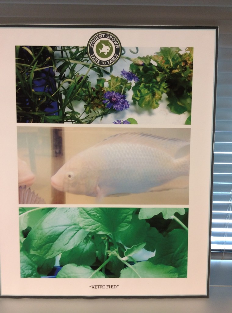 Students captured their hydroponic experience with photography.