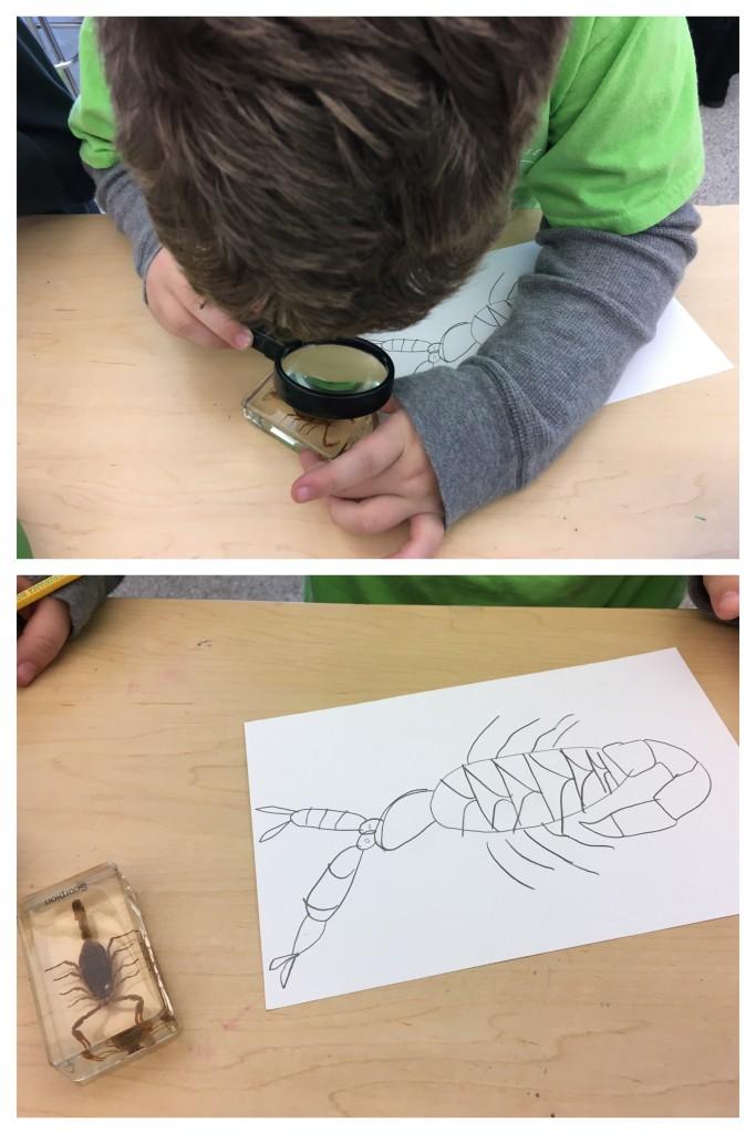 Student examining specimens, Education Closet