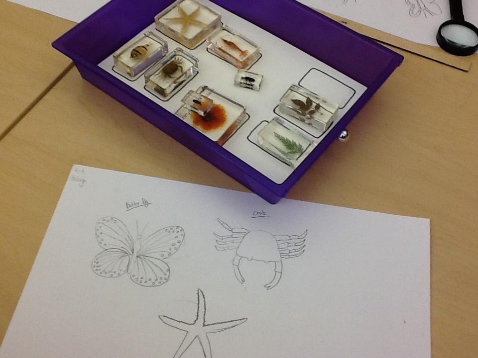 Specimens in STEAMing Art Room, Education Closet