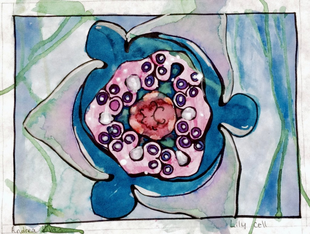 science and art example of a lily cell